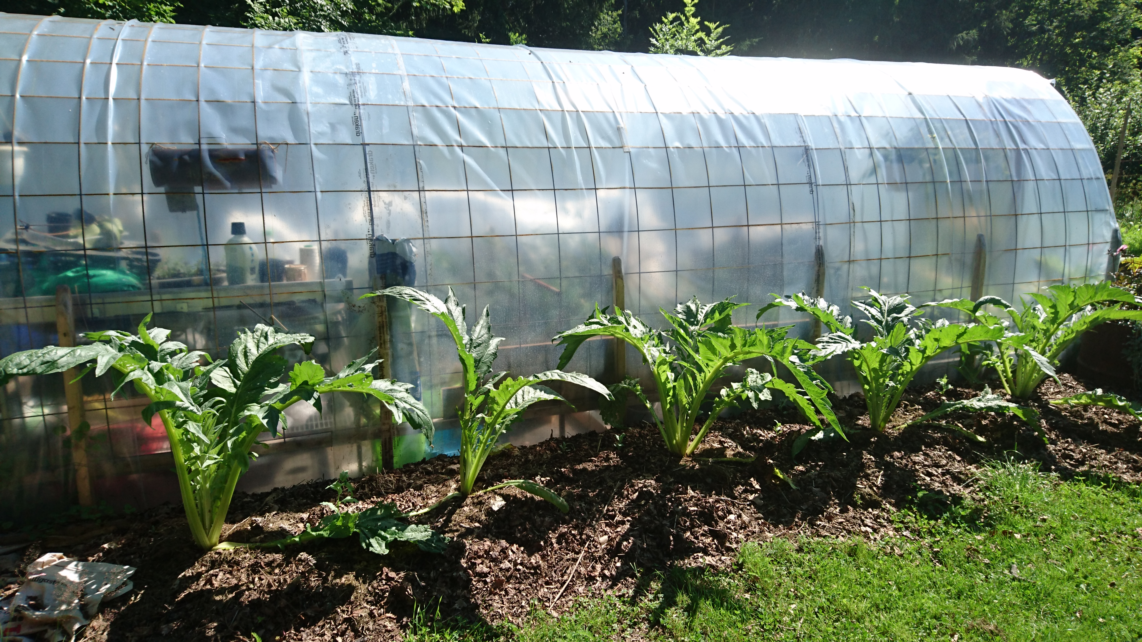 Bygg en enkel växthustunnel