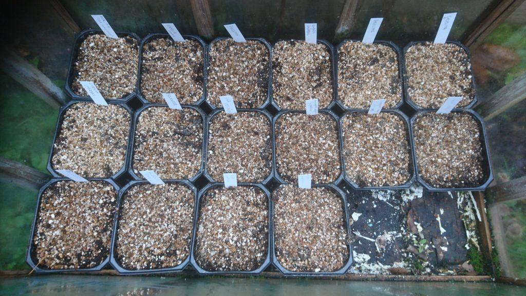Små odlingstråg med namnetiketter, sedda uppifrån