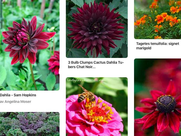 Urklipp från pinterest, bilder på blommor