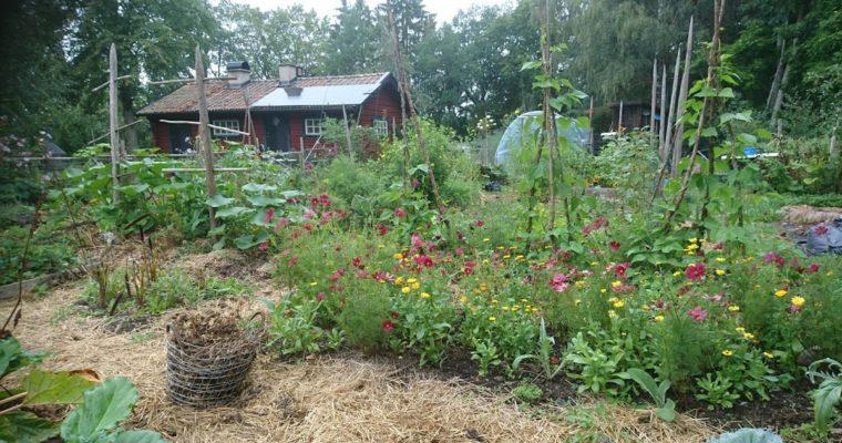 Jordförbättra din omöjliga jord