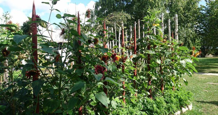 Blommande odlingar och inspiration