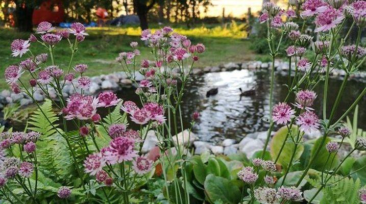 Trädgård i långsamhetens lov